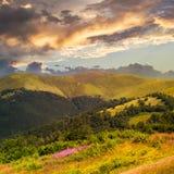 Le alte piante selvatiche alla montagna completano al tramonto Fotografia Stock Libera da Diritti