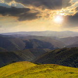 Le alte piante selvatiche alla montagna completano al tramonto Fotografia Stock