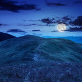 Le alte piante selvatiche alla montagna completano alla notte Immagine Stock
