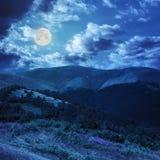 Le alte piante selvatiche alla montagna completano alla notte Fotografia Stock Libera da Diritti