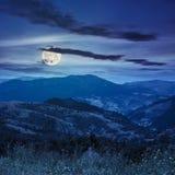 Le alte piante selvatiche alla montagna completano alla notte Fotografie Stock