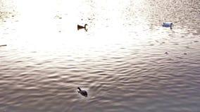 Le anatre e le tartarughe che nuotano ad Antonis Tritsis parcheggiano archivi video