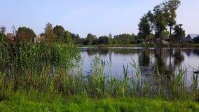 Le anatre nuotano nel lago vicino alle canne Rilevamento aereo archivi video