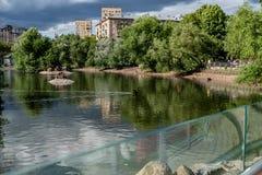 Le anatre nuotano nell'acqua allo zoo Fotografia Stock Libera da Diritti