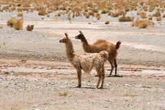 Le Ande in Argentina del Nord; Salta Jujuy Fotografie Stock Libere da Diritti