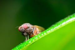 Le api Fotografie Stock Libere da Diritti
