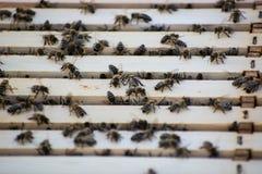 Le api dentro un alveare nel campo fotografie stock