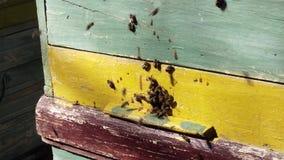 Le api funzionano il nettare del fiore di processo della mosca in miele video d archivio