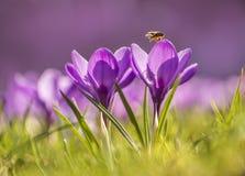 Le api già stanno funzionando Immagini Stock Libere da Diritti