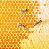 Le api preparano il miele Fotografia Stock Libera da Diritti