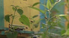 Le api volano all'alveare e volano dall'alveare al rallentatore video d archivio