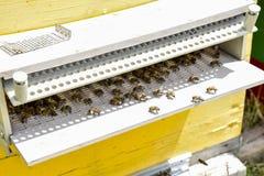 Le api volano all'entrata all'alveare Vassoio dell'alveare Entrata del foro all'alveare Fotografie Stock Libere da Diritti