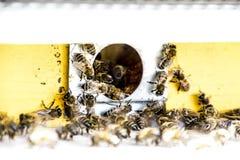Le api volano all'entrata all'alveare Vassoio dell'alveare Entrata del foro all'alveare Immagini Stock Libere da Diritti