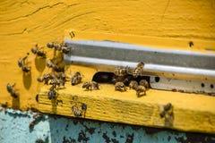 Le api volano all'entrata all'alveare Vassoio dell'alveare Entrata del foro all'alveare Immagini Stock