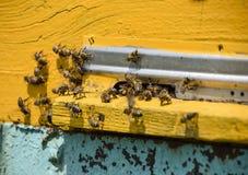 Le api volano all'entrata all'alveare Vassoio dell'alveare Entrata del foro all'alveare Fotografie Stock