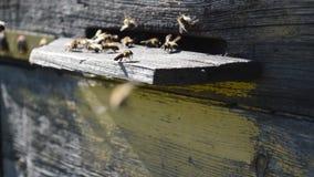 Le api volano dall'alveare video d archivio