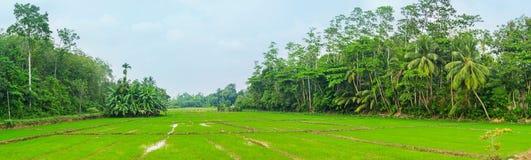 Le aziende agricole dello Sri Lanka Fotografie Stock Libere da Diritti