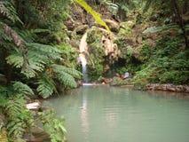 Le Azzorre S Parco di Miguel Island Terra Nostra fotografie stock libere da diritti