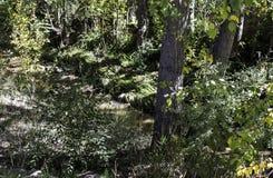 Le bâti de fleuve Photos libres de droits