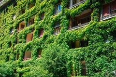 Le bâtiment vert a couvert le lierre Images libres de droits