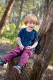 Le bébé bigle s'assied dans un arbre photographie stock