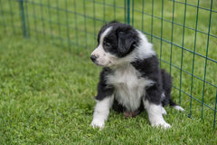 Le bébé de chien s'assied dans le pré Photo stock