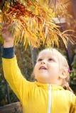Le bébé de petite fille mange les baies saisonnières de mer-nerprun images stock