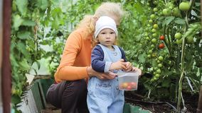Le bébé et la grand-mère sélectionne des tomates clips vidéos