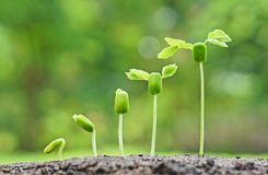 Le bébé plante la jeune plante Photographie stock libre de droits