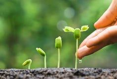 Le bébé plante la jeune plante Photos libres de droits