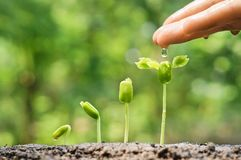 Le bébé plante la jeune plante Images stock