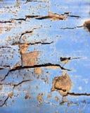 Le béton et la brique avec l'épluchage bleu peignent le fond abstrait images libres de droits