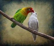 Le baiser Photo stock