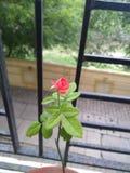 Le balcon s'est levé photographie stock libre de droits