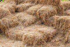 Le balle delle pile del fieno nell'agricoltura coltivano, il simbolo del harvestin Immagini Stock