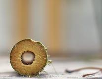 Le bambou abattu Image libre de droits