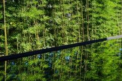 Le bambou avec se reflètent dans l'eau Image libre de droits