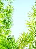 Le bambou de lumière du soleil part du cadre Photographie stock libre de droits