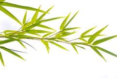 Le bambou laisse le plan rapproché photographie stock libre de droits