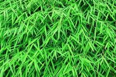 Le bambou part du fond images stock