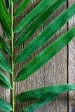 Le bambou part sur la texture en bois grunge de fond avec l'ombre Photo stock