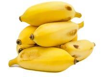 Le banane coltivate mature con isolato su un fondo bianco, là sono partenocarpico quasi sempre senza semi e quindi sterile fotografie stock