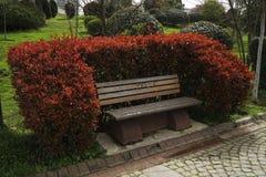 Le banc en bois avec les buis formés ressemble au sofa Photos libres de droits