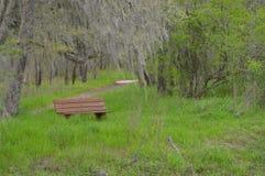Le banc sous une mousse a couvert l'arbre Photo libre de droits