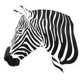Le bande della zebra Immagini Stock Libere da Diritti