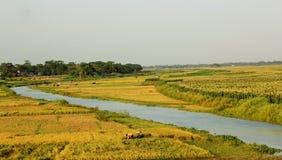 Le Bangladesh productif Photo libre de droits