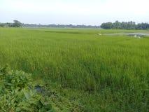 Le Bangladesh vert Photo libre de droits
