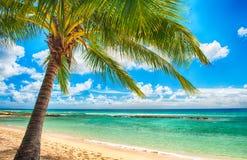 Le Barbados Fotografie Stock