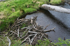 Le barrage de castor Photos libres de droits