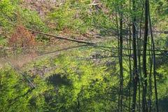 Le barrage de castor sur The Creek dans la forêt de peu carpathien photographie stock libre de droits